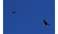 Schöne fotografien vom himmel zum gratis nutzen eignen sich für